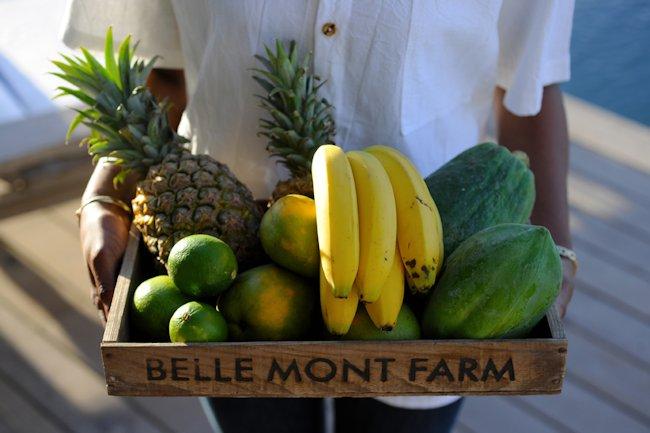 Belle_Mont_Farm_Fruit_Basket